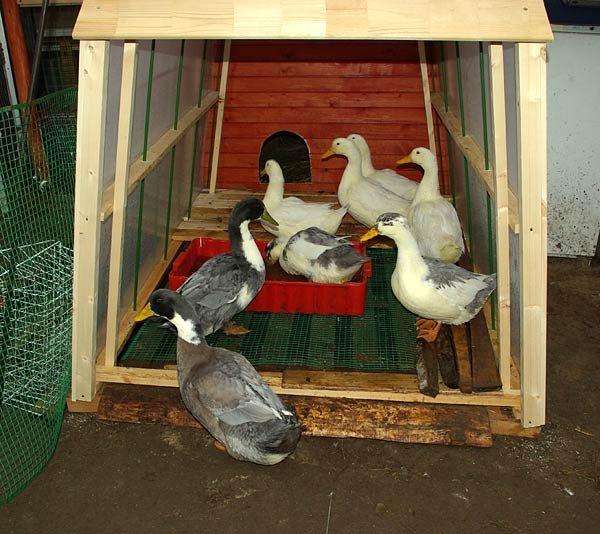 Строим водоем для уток и гусей
