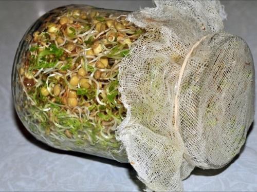 фасоль для еды