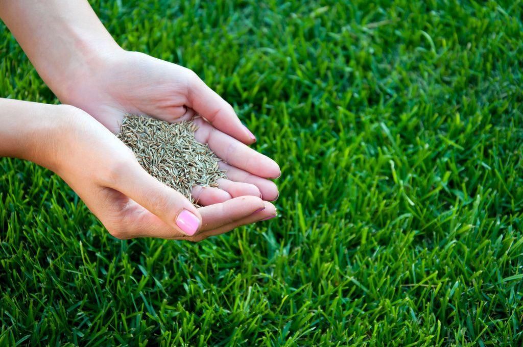 трава лилипут