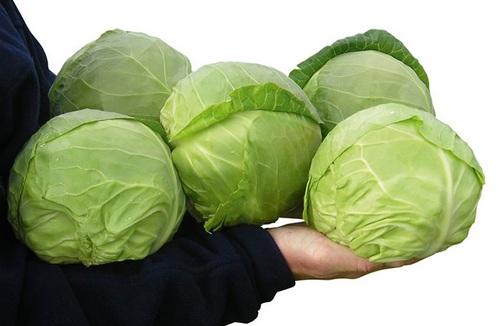сорт капусты Июньская