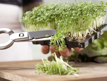 Срезка зелени ножницами