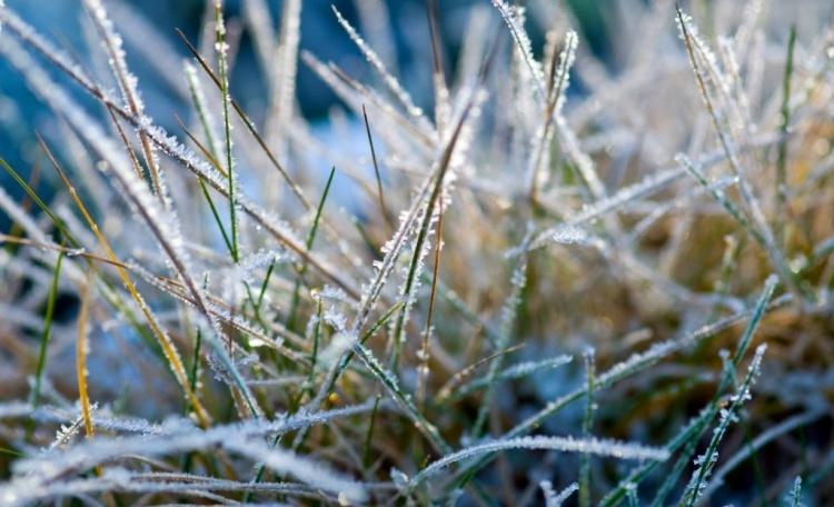 Капуста до какой температуры выдерживает заморозки