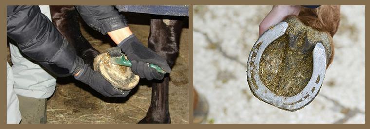 Чистка копыт лошади