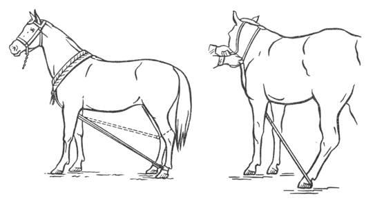 Случка лошадей видео - Agrodelo