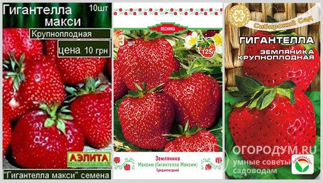 Упаковки посадочного материала (семян и саженцев) земляники «Гигантелла» в различных вариантах, предлагаемых производителями