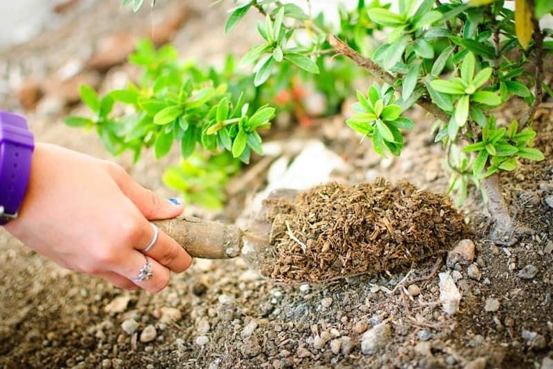Узнайте как и чем подкармливать деревья и плодовые кустарники весной