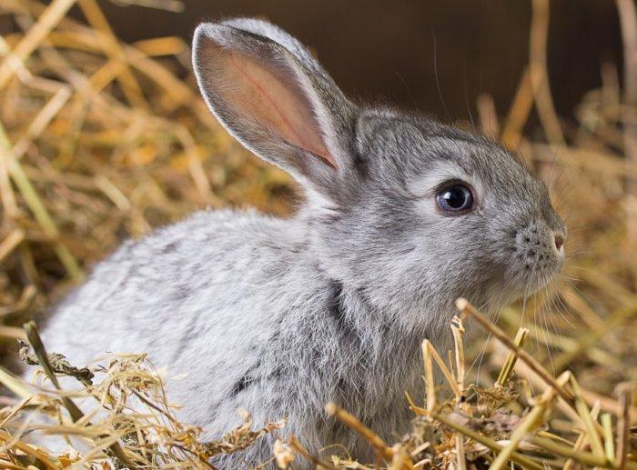 Кролик плохо ест, мало пьёт