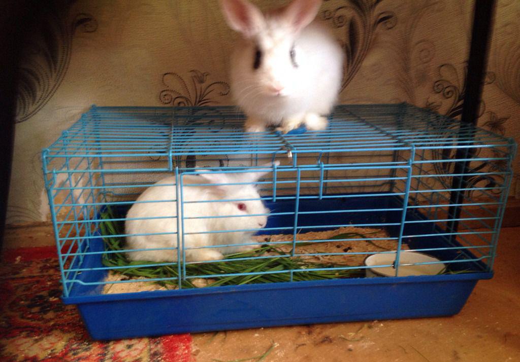 Выбор клетки для декоративного кролика