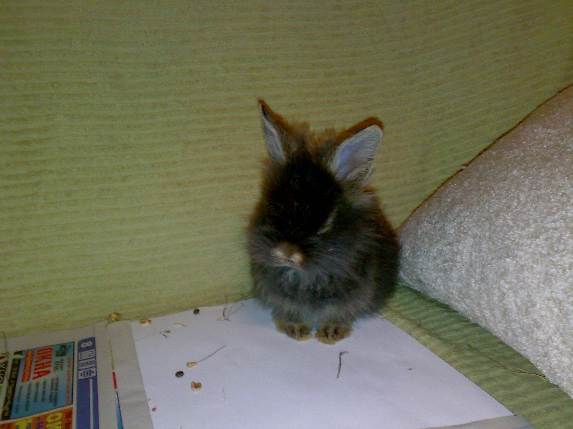 Основы содержания декоративного кролика