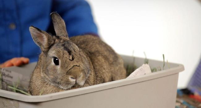 Кролик у врача
