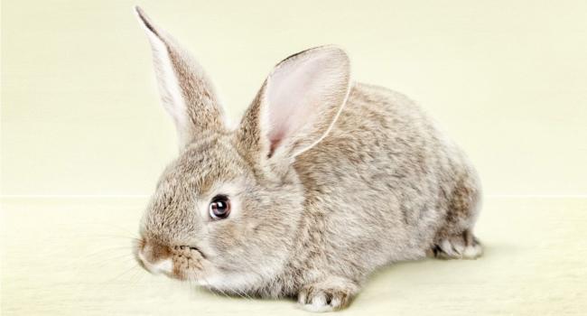 Угнетенный кролик