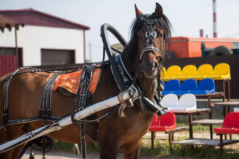 Упряжь для лошади