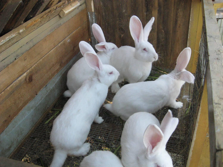 Несколько кроликов