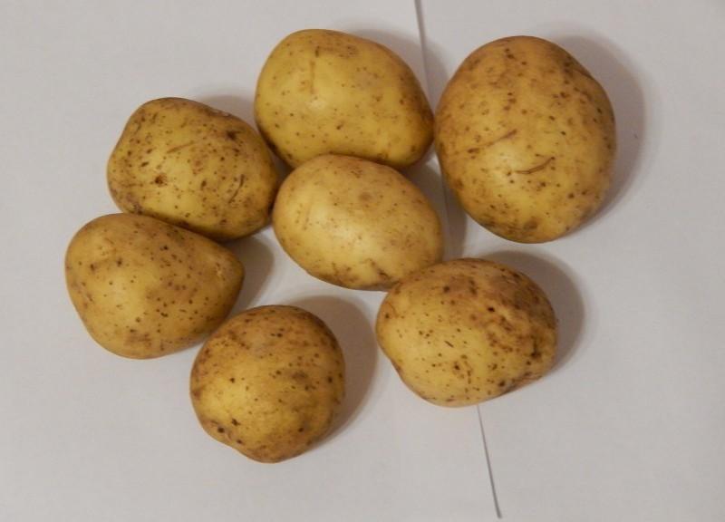 Сорт картофеля «Янка»: характеристика, урожайность, отзывы и фото