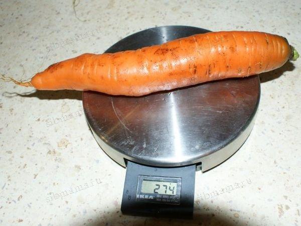 Выращивание моркови в Сибири