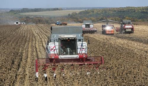 Жатка для уборки подсолнечника и «ручные» методы сбора урожая на даче!