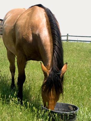 Выращивание лошади