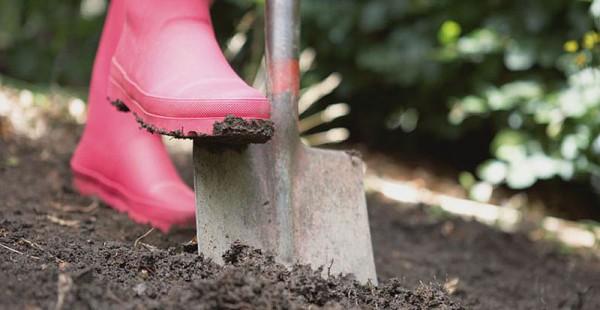 Подкормка почвы перед посадкой моркови весной