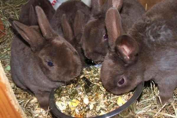 Подросшие крольчата едят сбалансированный корм