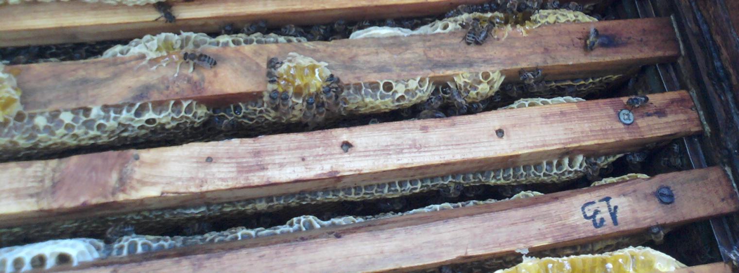 Сборка гнезда пчел на зиму