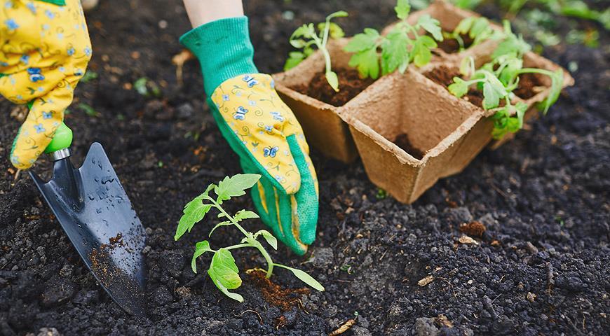 Выращивание помидоров и перцев в одной теплице