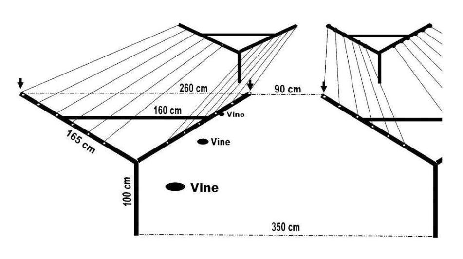 Игрек-образная виноградная пергола