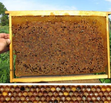 Цветочная пыльца и перга