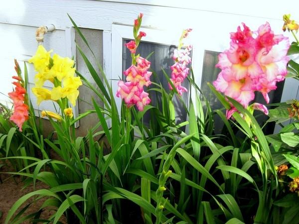 Прекрасные цветы - результат правильного ухода