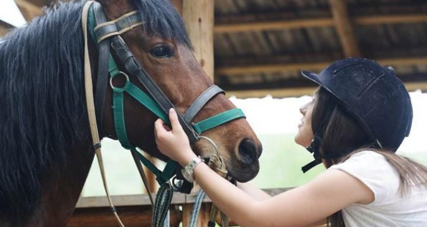Летом обеспечьте лошади кормление свежей травой