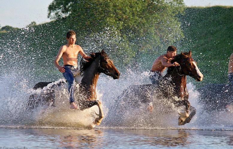 Лошадь нуждается в водных процедурах