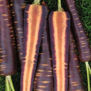 Использование черно моркови