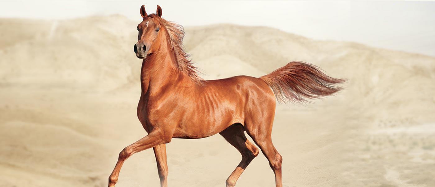 Живот лошади