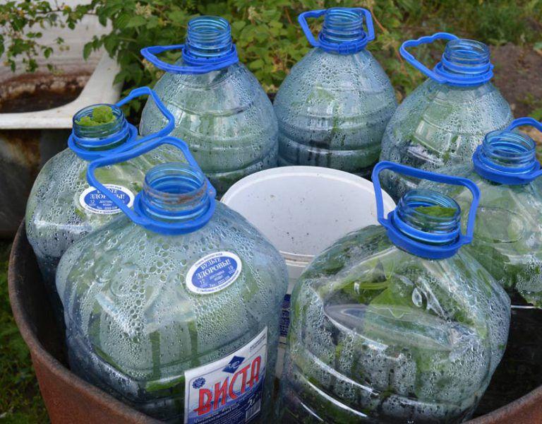 Посадка огурцов в 5 литровых бутылках как надо делать