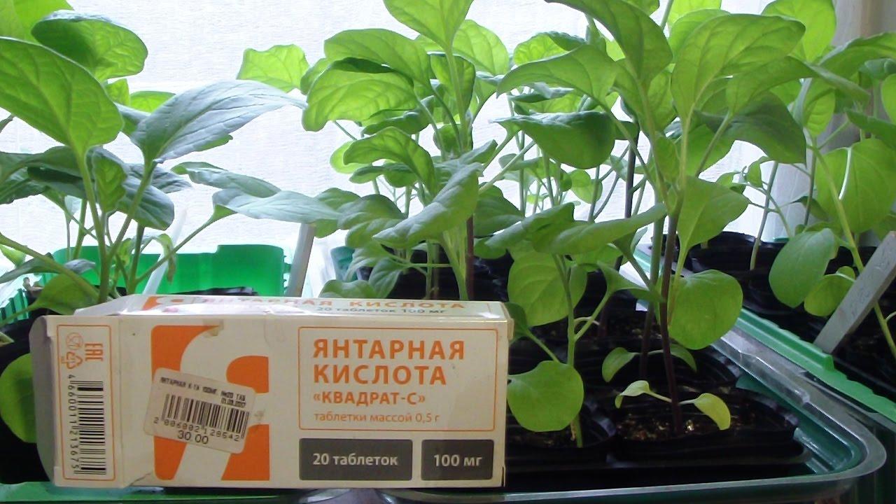 Как используется янтарная кислота для помидор