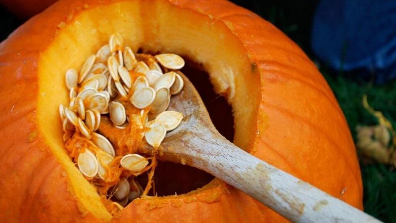 Как выбрать и подготовить семена тыквы для посадки, а затем вырастить из них отменный урожай
