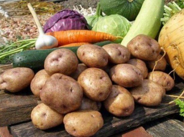 Картофель и другие овощи