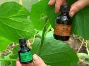 подкормка огурцов зеленкой и йодом