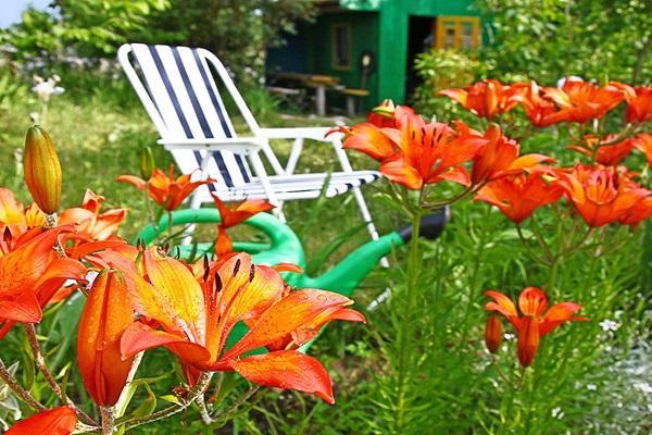 кресло на лужайке