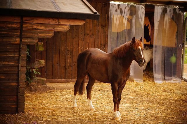 Лошадь и конюшня