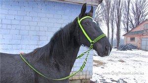 Уздечка на лошадь