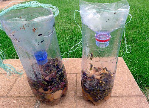 ловушки для ос из бутылки