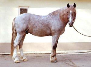 Описание лошади чалой масти