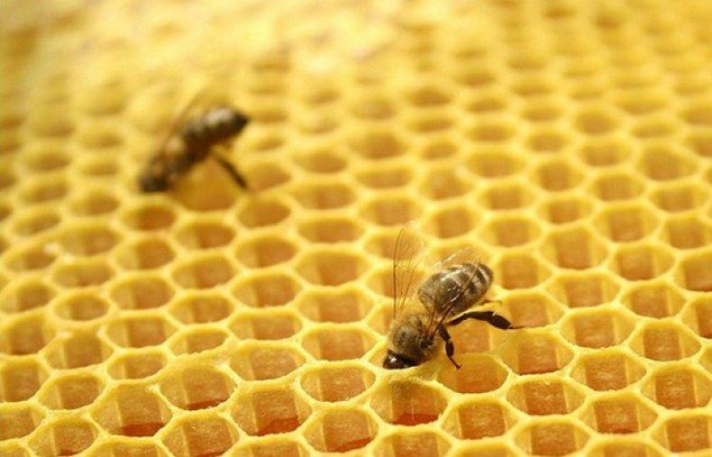 Разведение пчел методом Цебро