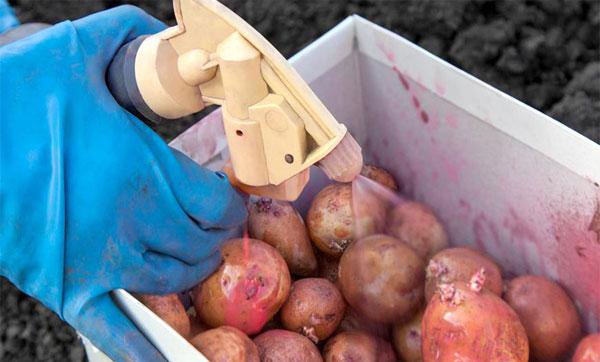 обработка картофеля