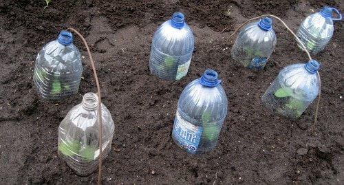 огурцы под бутылкой
