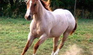 Какие бывают масти у лошадей