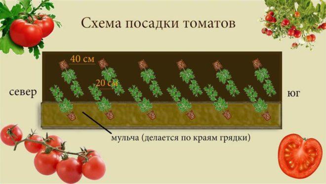схема посадки томатов