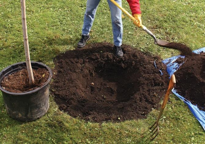 Посадочная яма для груши