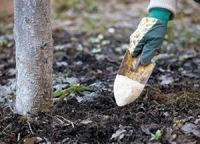 Удобрение для дерева
