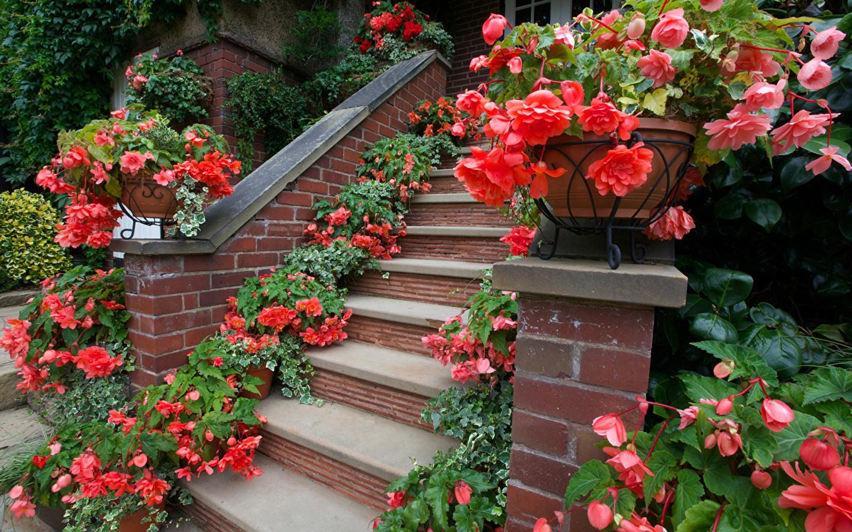 Лестница, украшенная бегонией